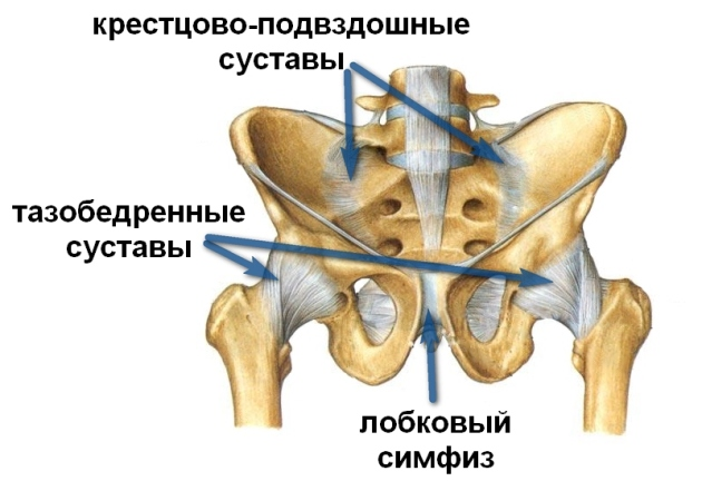 Болезни тазабедренных суставов цены на мрт плечевого сустава