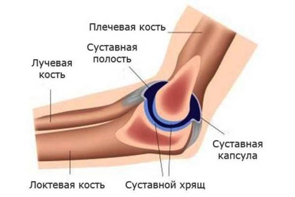 анатомия суставов