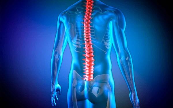 Ученые предложили путь восстановления после травмы спинного мозга